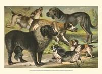 Johnson's Dog Breeds III Fine-Art Print