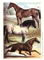 Johnson's Horse Breeds I Fine-Art Print