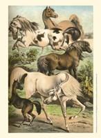 Johnson's Horse Breeds II Fine-Art Print