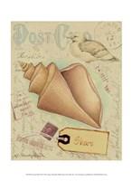 Postcard Shells III Fine-Art Print