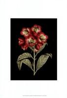 Crimson Flowers on Black III Fine-Art Print