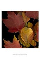 Small Vivid Leaves IV (ST) Fine-Art Print