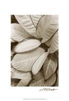 Garden Textures II Fine-Art Print