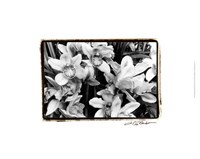Striking Orchids III Fine-Art Print