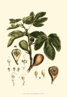 Small Miller's Bounty III (P) Fine-Art Print