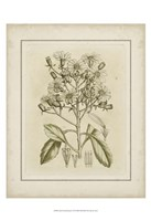 Small Tinted Botanical I (P) Fine-Art Print