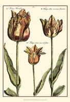 Small DePasse Tulipa I (P) Fine-Art Print