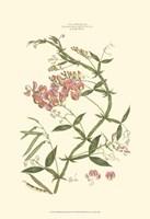Small Blushing Pink Florals VI (P) Fine-Art Print