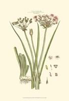 Small Blushing Pink Florals VIII(P) Fine-Art Print