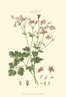 Small Blushing Pink Florals IX (P) Fine-Art Print