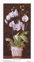 Orchid Phaleanopsis Fine-Art Print