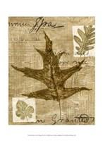 Mini Leaf Collage II (ST) Fine-Art Print