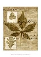Mini Leaf Collage III (ST) Fine-Art Print