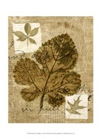 Mini Leaf Collage IV (ST) Fine-Art Print
