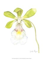 Small Orchid Beauty I (U) Fine-Art Print