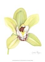 Small Orchid Beauty II (U) Fine-Art Print