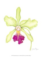 Small Orchid Beauty III (U) Fine-Art Print