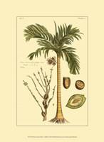 Printed Exotic Palm V Fine-Art Print