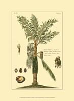 Printed Exotic Palm VI Fine-Art Print