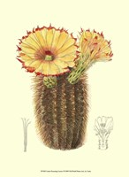Flowering Cactus I Fine-Art Print