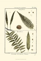 Fern Classification I Fine-Art Print