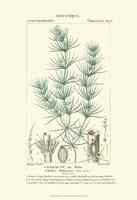 Botany I Fine-Art Print