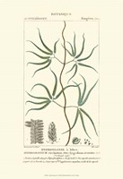 Botany II Fine-Art Print