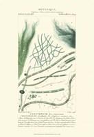 Botany III Fine-Art Print