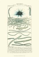 Botany IV Fine-Art Print