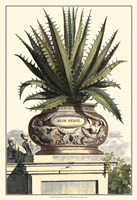 Antique Munting Aloe I Fine-Art Print