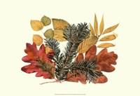 Sm Wh Oak,Balsam Fir&Yw Birch Fine-Art Print