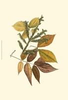 Sm Elm, Spruce, Beech & Ash Fine-Art Print