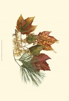 Sm Red Maple,Tamarack & Wh Pine Fine-Art Print