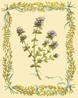 Small Thyme Fine-Art Print