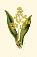 Orchid Array I Fine-Art Print
