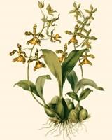 Orchid Array II Fine-Art Print