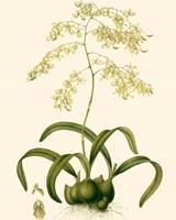 Orchid Array III Fine-Art Print