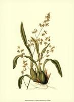 Orchid Array IV Fine-Art Print