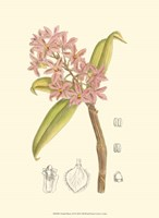 Orchid Plenty III Fine-Art Print