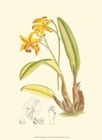 Orchid Plenty IV Fine-Art Print