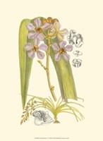Orchid Plenty V Fine-Art Print