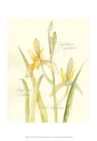 Elissa's Garden IV Fine-Art Print