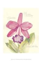 Elissa's Garden V Fine-Art Print