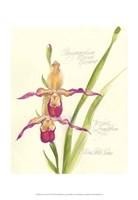 Elissa's Garden VII Fine-Art Print