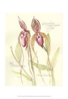 Elissa's Garden VIII Fine-Art Print
