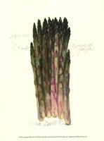 Asparagus Officinalis Fine-Art Print