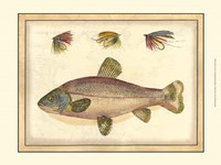 Printed Tom's Trout Fine-Art Print