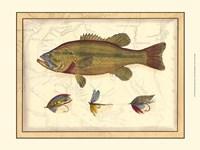 Printed Paul's Bass Fine-Art Print