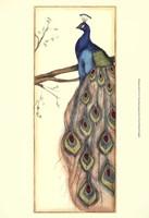 Small Rebecca's Peacock II (P) Fine-Art Print