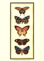 Small Butterfly Collector V (P) Fine-Art Print